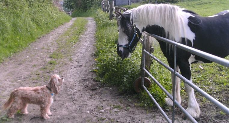 Hof-Hund-Pferd